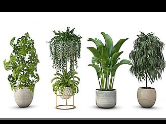 現代盆栽模型