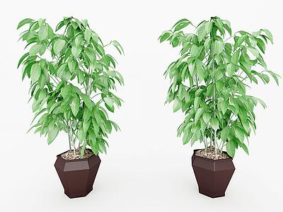 植物裝飾畫模型3d模型