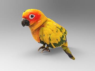 鸚鵡模型3d模型
