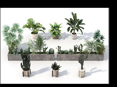 植物盆栽模型3d模型
