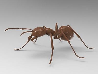 螞蟻模型3d模型
