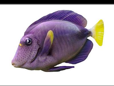 金魚模型3d模型