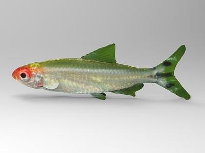 鯉魚模型3d模型