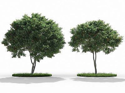 3d細葉雪茄<font class='myIsRed'>花</font>胡蘿卜樹模型