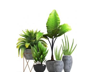 現代盆栽植物組合3d模型