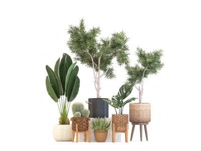 3d盆栽植物組合模型