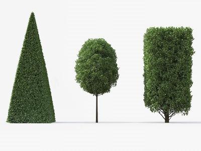 歐洲角木EuropeanHornbeam模型3d模型