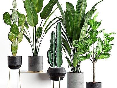 現代綠植盆栽芭蕉仙人掌模型3d模型