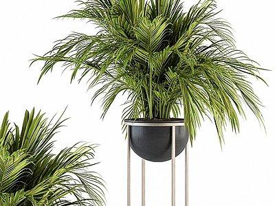 現代綠植盆栽散尾葵模型3d模型