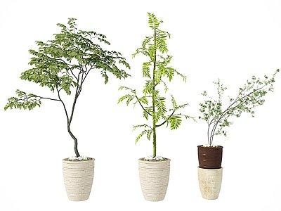 盆栽3d模型