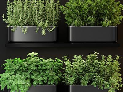 現代綠植盆栽綠化帶模型3d模型