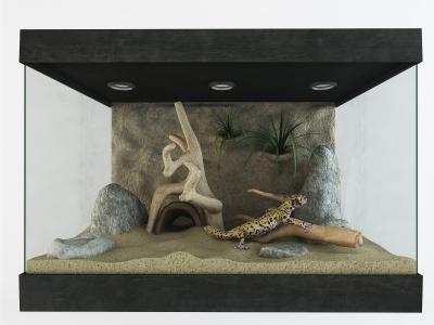 變色龍蜥蜴寵物缸裝飾擺件模型3d模型