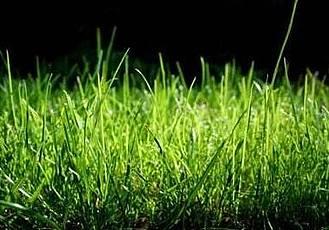 C4D草叢繪制插件 C4DZone Grass Painter 2.0 for Cinema4D R13-R16